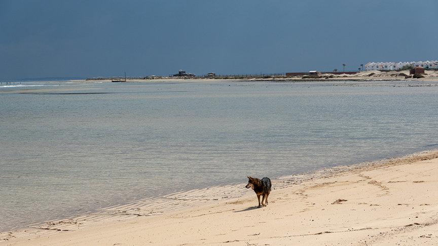 Wadi Lahami Bay mit Hund