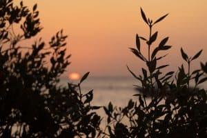 Sunset with mangrove
