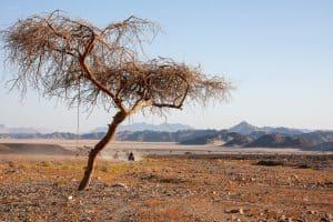 Ägypten Reiseblog - Quadtour 16