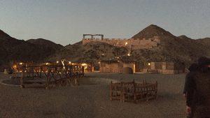 Ägypten Reiseblog - die Wüste lebt! 7