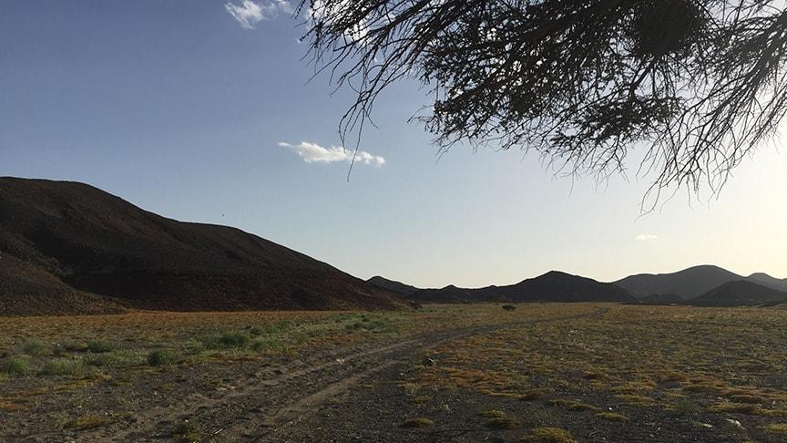 Ägypten Reiseblog - die Wüste lebt! 6