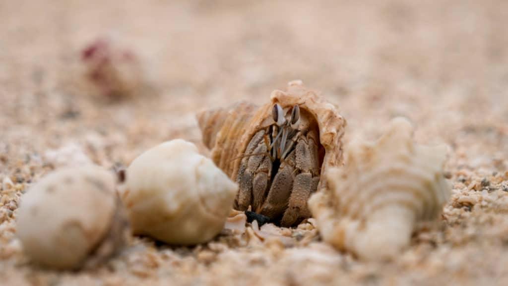 haeuserkampf-im-sand